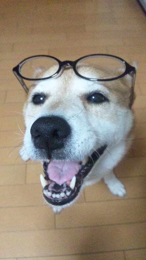 眼鏡 その2
